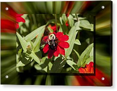 Let It Bee Acrylic Print