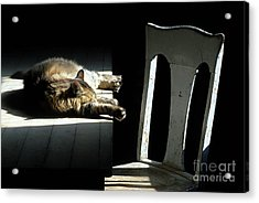 Let Sleeping Cats Lie Acrylic Print by Bob Christopher