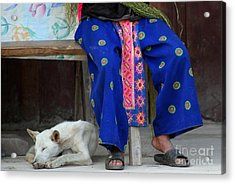 Acrylic Print featuring the photograph Let Sleeping Dogs Dream by Nola Lee Kelsey