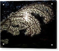 Acrylic Print featuring the photograph Let The Light Shine Through by Chad and Stacey Hall