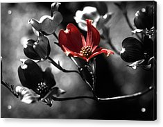 Let There Be Color Acrylic Print by Bonnie Bruno