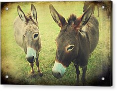 Let's Chat Acrylic Print by Laurie Search