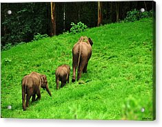 Let's Move On Acrylic Print by Vinod Nair