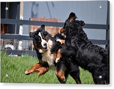 Lets Play Acrylic Print by Paulette Hawkins