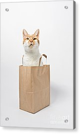 Letting The Cat Out Of The Bag Acrylic Print by Catherine MacBride