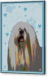Lhasa Apso Acrylic Print by One Rude Dawg Orcutt