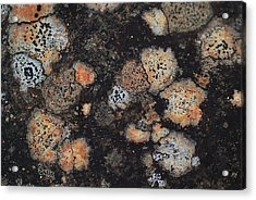 Lichen Abstract Acrylic Print by Susan Capuano