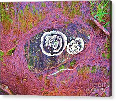 Lichen Eyes Acrylic Print by Michele Penner