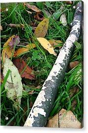 Lichen Recycling Acrylic Print by Trish Hale