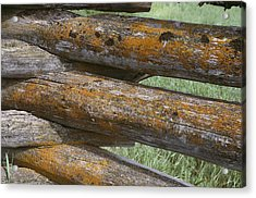 Lichens Growing On A Corral Fence Acrylic Print by Stephen Sharnoff