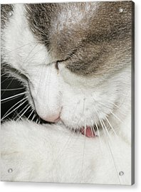 Acrylic Print featuring the photograph Lick by David Lester