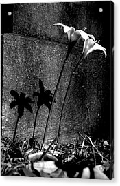 Life And Death Acrylic Print