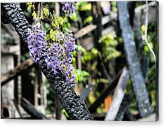 Life Goes On Acrylic Print by JC Findley