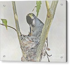 Life In Tiny Form  Acrylic Print by Judy Grant