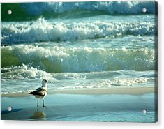 Acrylic Print featuring the photograph Life Is A Beach........ by Tanya Tanski