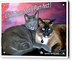 Life Is Purrfectly Purrfect Acrylic Print