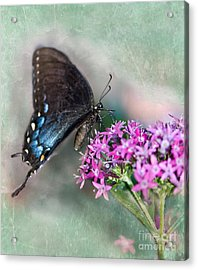 Life Is Sweet Acrylic Print by Betty LaRue