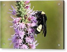 Life Of A Bee Acrylic Print by Laura Oakman