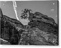 Life On The Edge Acrylic Print by George Buxbaum