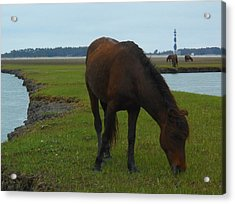 Life Without Fences Acrylic Print by Jeff Moose