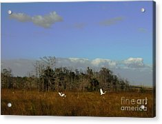 Lifes Field Of Dreams Acrylic Print