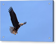 Acrylic Print featuring the photograph Lift by Jim Garrison