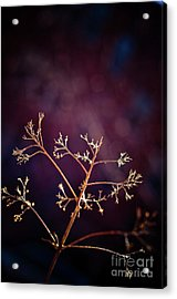 Light 1 Acrylic Print by Rossi Love