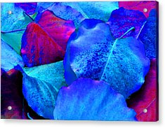 Light Blue And Fuchsia Leaves Acrylic Print by Sheila Kay McIntyre