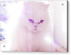 Light Cat Acrylic Print by Luis Hernández Diaz