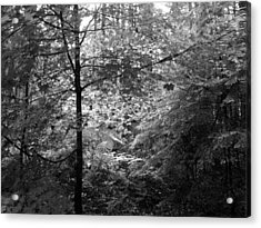 Acrylic Print featuring the photograph Light In The Woods by Kathleen Grace