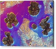 Light Micrograph Of Cast Iron, Dic Acrylic Print