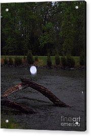 Light On A Limb Acrylic Print