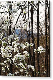 Light Rejoicing Acrylic Print