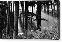 Acrylic Print featuring the photograph Light Through The Trees by Don Schwartz