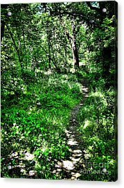 Lighted Path Acrylic Print by Colleen Kammerer