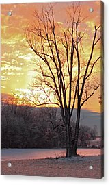 Lighten Up The Sty Acrylic Print by Mike Flake