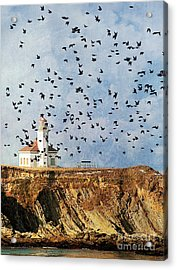 Lighthouse Birds  Acrylic Print