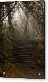 Lighting The Path Acrylic Print by Andrew Soundarajan