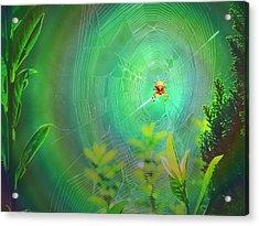 Lightning Spider Acrylic Print by Helmut Rottler