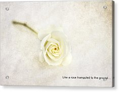 Like A Rose... Acrylic Print