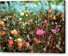 Acrylic Print featuring the photograph Lil' Blessings by Yen