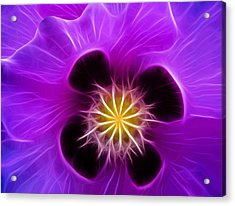 Lilac Poppy Acrylic Print