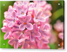 Acrylic Print featuring the photograph Lilac  by Puzzles Shum