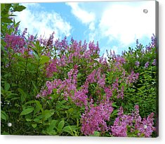 Lilacs In Rochester Ny Acrylic Print by Jeanette Oberholtzer
