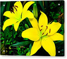 Lilies Acrylic Print by Michael Ray