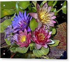 Lilies No. 11 Acrylic Print
