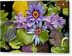 Lilies No. 12 Acrylic Print