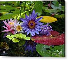 Lilies No. 13 Acrylic Print
