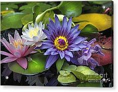 Lilies No. 16 Acrylic Print
