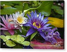 Lilies No. 17 Acrylic Print